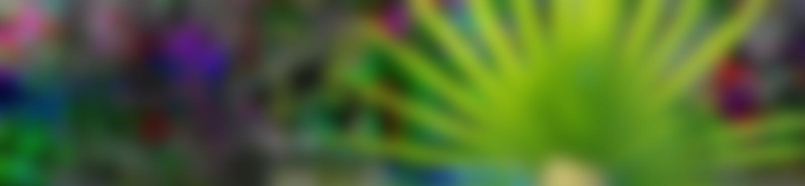 Blurred 1e079c79 c231 4f2d 97c9 7eb6aeea60f9