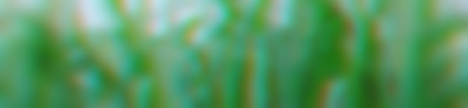 Blurred e4cebd56 ac01 4788 9e25 b057c13aab86